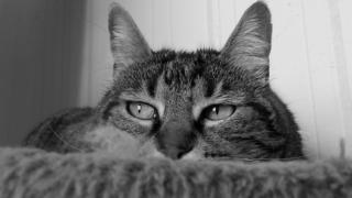 モノクロの猫