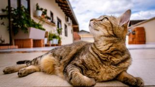 上を眺める猫