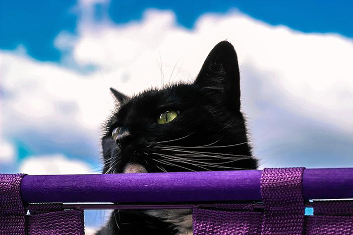 青い空と猫